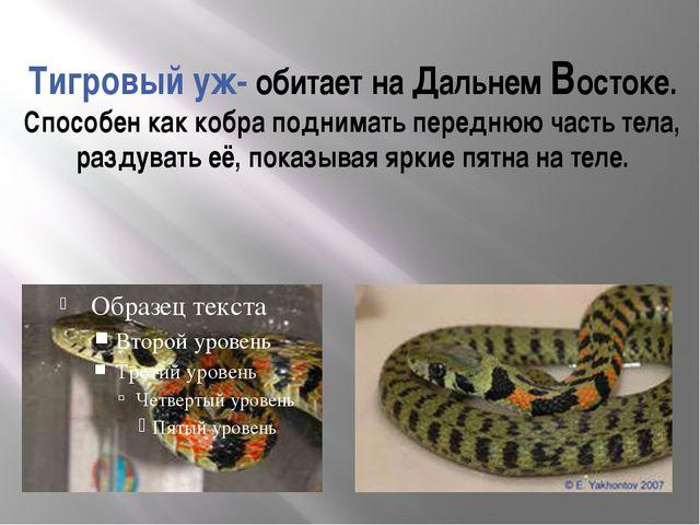 Тигровый уж- обитает на Дальнем Востоке. Способен как кобра поднимать передню...