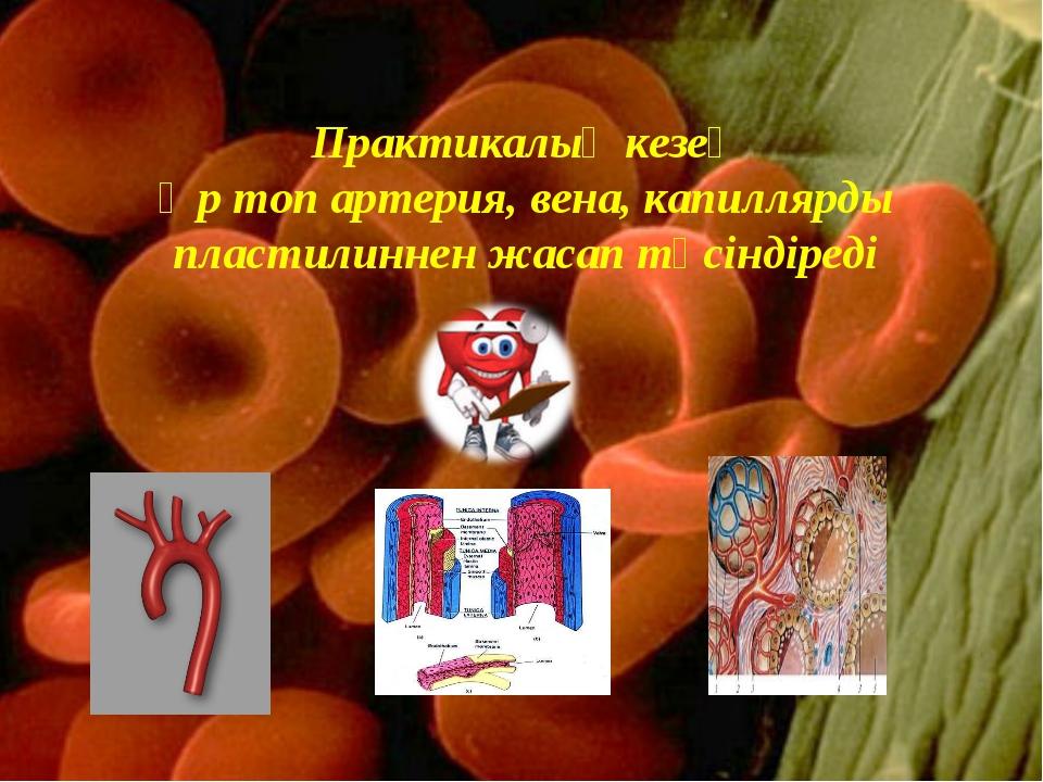 Практикалық кезең Әр топ артерия, вена, капиллярды пластилиннен жасап түсінді...