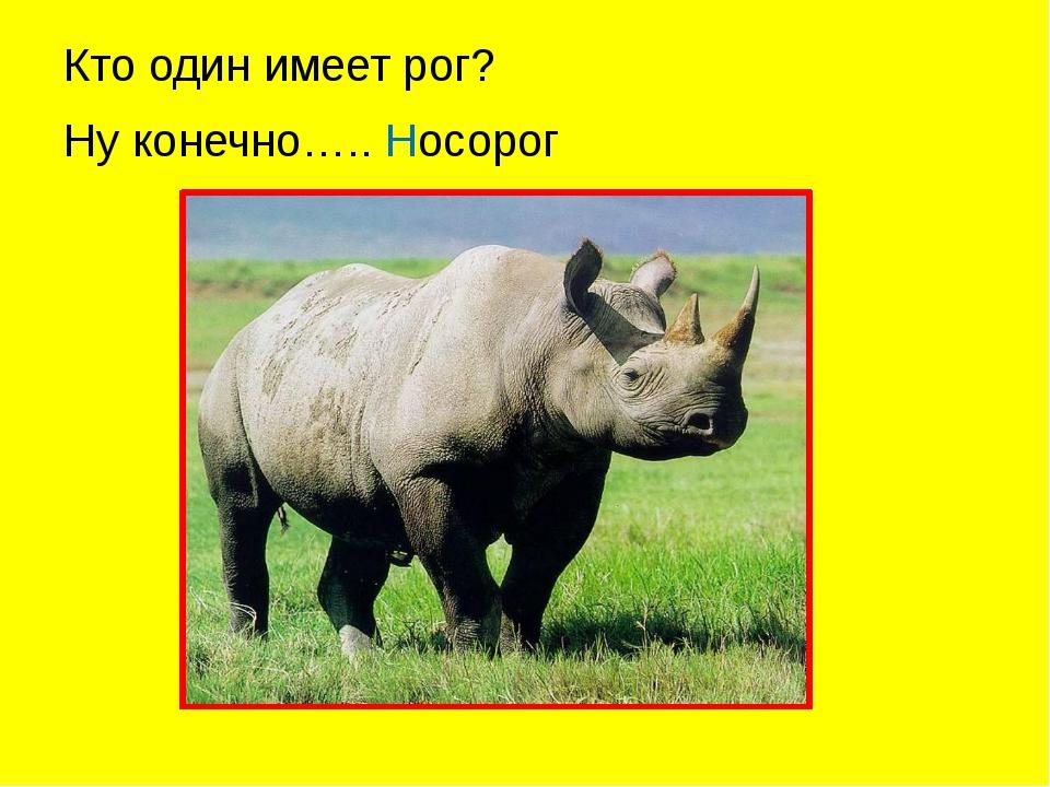 Кто один имеет рог? Ну конечно….. Носорог