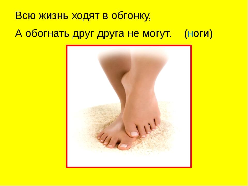Всю жизнь ходят в обгонку, А обогнать друг друга не могут. (ноги)