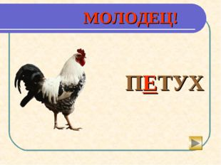 МОЛОДЕЦ!  ПЕТУХ