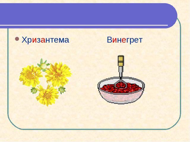 Хризантема Винегрет