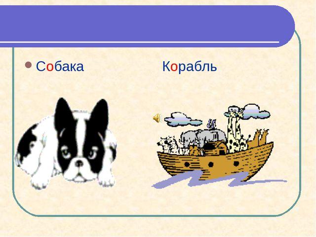 Собака Корабль