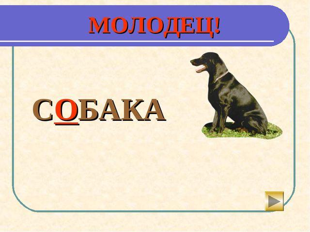 МОЛОДЕЦ! СОБАКА