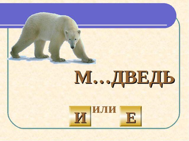 М…ДВЕДЬ  или И Е