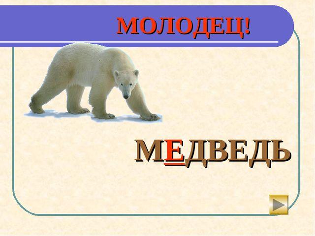 МОЛОДЕЦ!    МЕДВЕДЬ