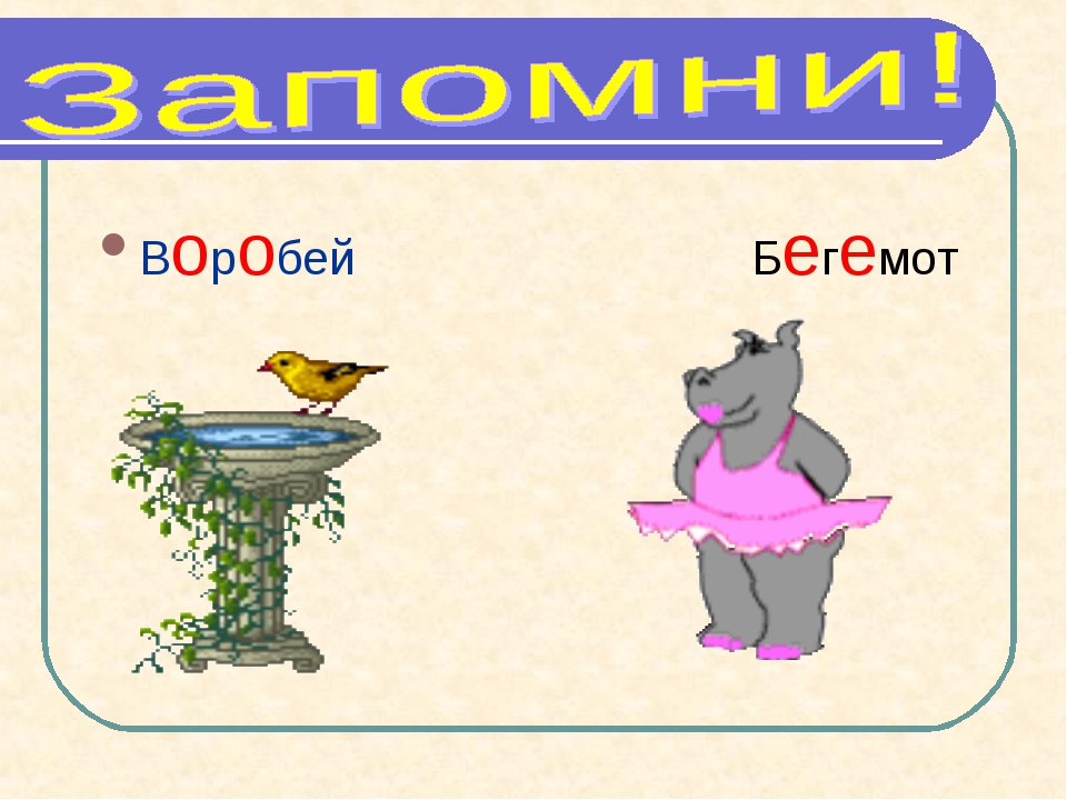 Воробей Бегемот