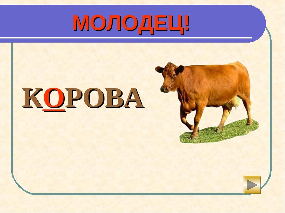 МОЛОДЕЦ!  КОРОВА