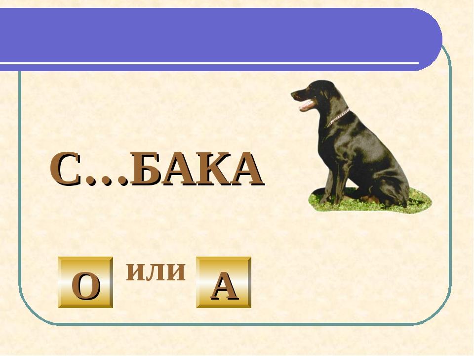 С…БАКА или О А