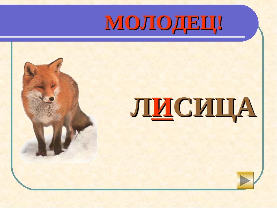 МОЛОДЕЦ!  ЛИСИЦА