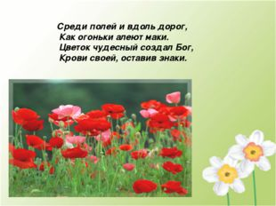 Среди полей и вдоль дорог, Как огоньки алеют маки. Цветок чудесный создал Бог