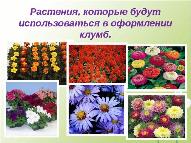 Растения, которые будут использоваться в оформлении клумб.