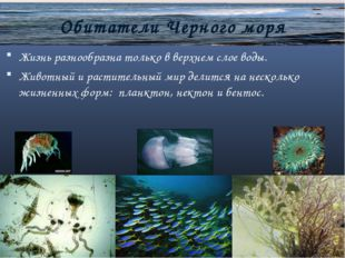 Обитатели Черного моря Жизнь разнообразна только в верхнем слое воды. Животн