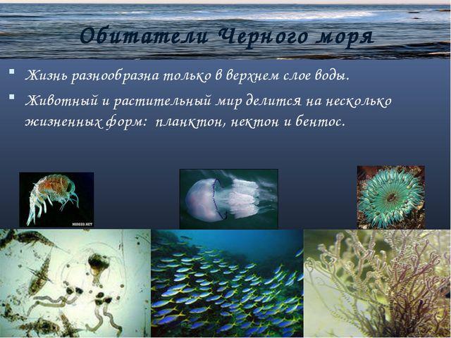 Обитатели Черного моря Жизнь разнообразна только в верхнем слое воды. Животн...