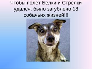 Чтобы полет Белки и Стрелки удался, было загублено 18 собачьих жизней!!!