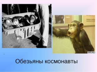 . Обезьяны космонавты