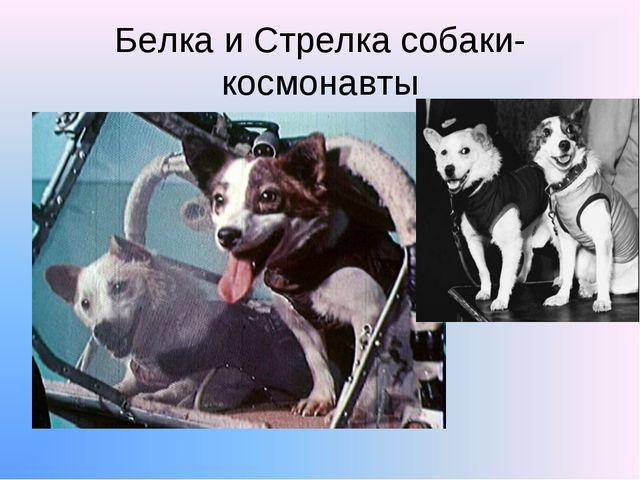 Белка и Стрелка собаки-космонавты