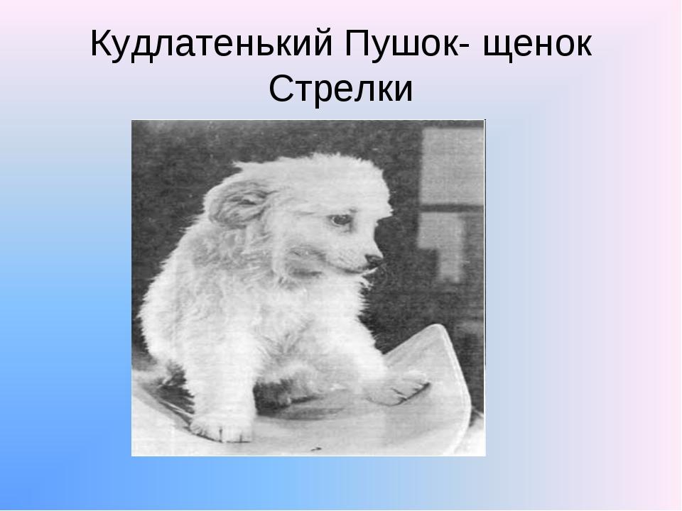 Кудлатенький Пушок- щенок Стрелки