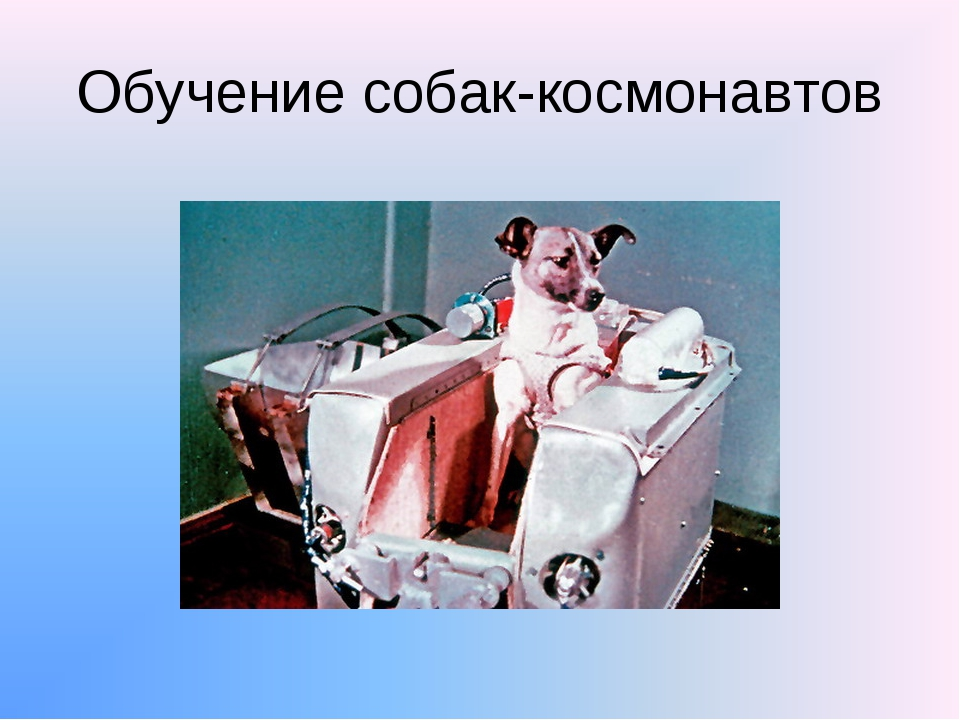 Обучение собак-космонавтов