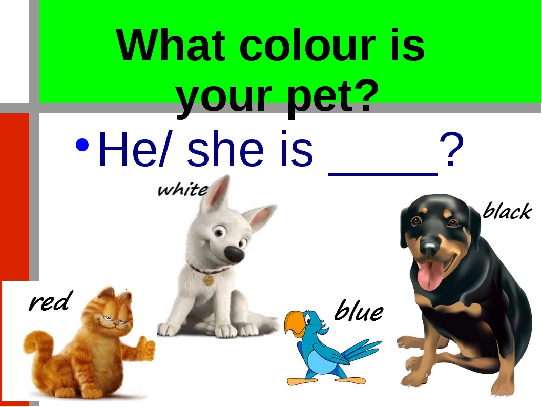 What colour is your pet? He/ she is ____?