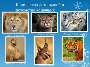 Количество детенышей в потомстве кошачьих Пума – 1-5 штук Кошка – 1-12 штук М