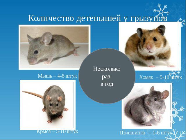 Количество детенышей у грызунов Мышь – 4-8 штук Крыса – 5-10 штук Хомяк – 5-1...