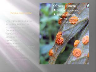 Ржавчинные грибы Эти грибы произрастают на надземных частях различных растени