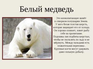 Белый медведь Это млекопитающее живёт в северном полушарии Земли. У него бела