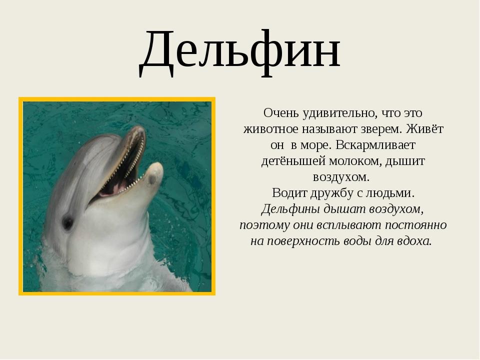 Дельфин Очень удивительно, что это животное называют зверем. Живёт он в море....