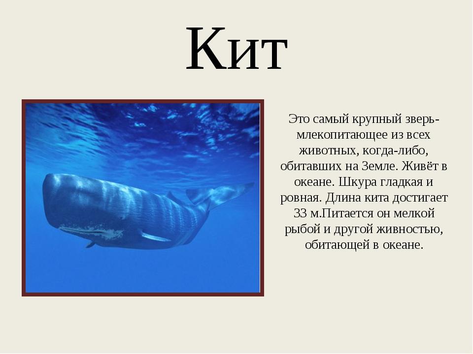Кит Это самый крупный зверь- млекопитающее из всех животных, когда-либо, обит...