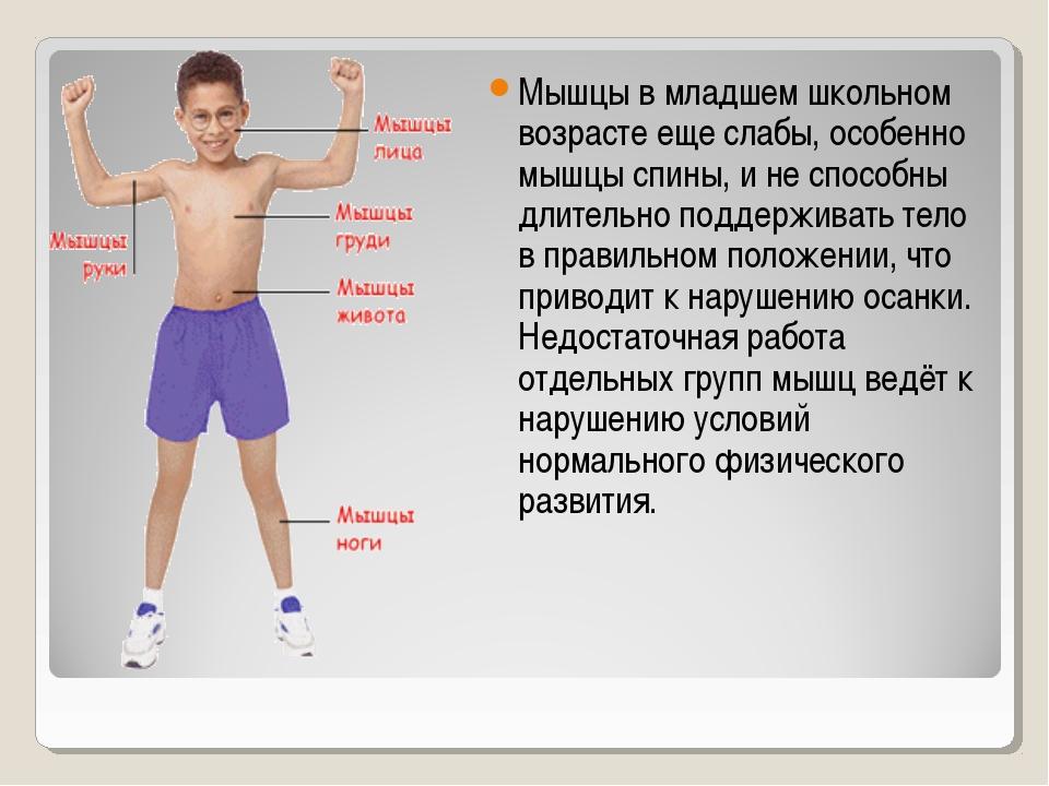 Мышцы в младшем школьном возрасте еще слабы, особенно мышцы спины, и не спосо...