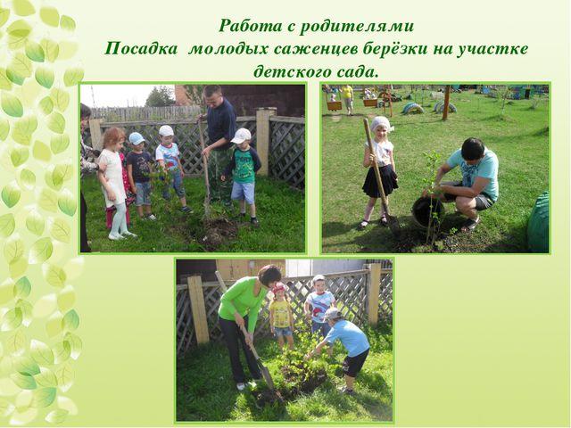 Работа с родителями Посадка молодых саженцев берёзки на участке детского сада.
