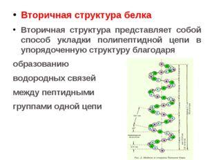 Вторичная структура белка Вторичная структура представляет собой способ уклад