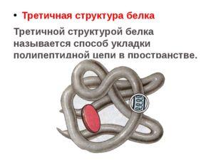 Третичная структура белка Третичной структурой белка называется способ укладк