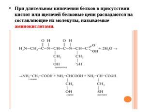 При длительном кипячении белков в присутствии кислот или щелочей белковые цеп