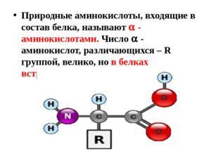 Природные аминокислоты, входящие в состав белка, называют  - аминокислотами.