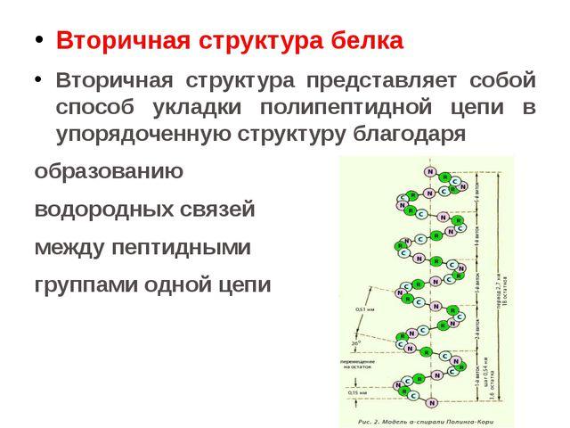 Вторичная структура белка Вторичная структура представляет собой способ уклад...