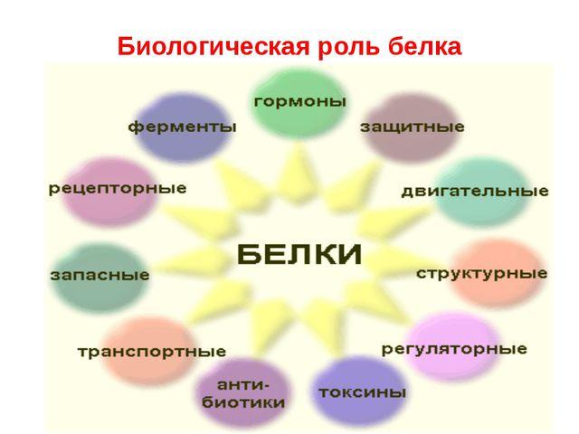 Биологическая роль белка