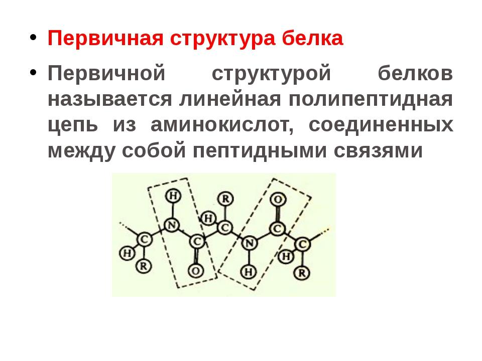 Первичная структура белка Первичной структурой белков называется линейная пол...