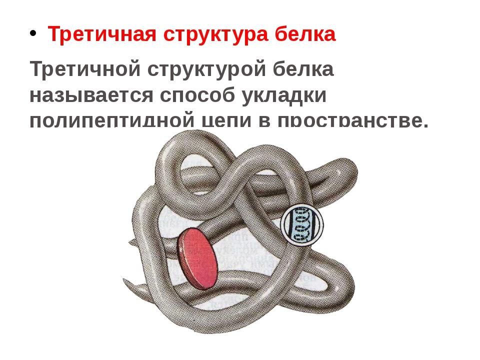 Третичная структура белка Третичной структурой белка называется способ укладк...
