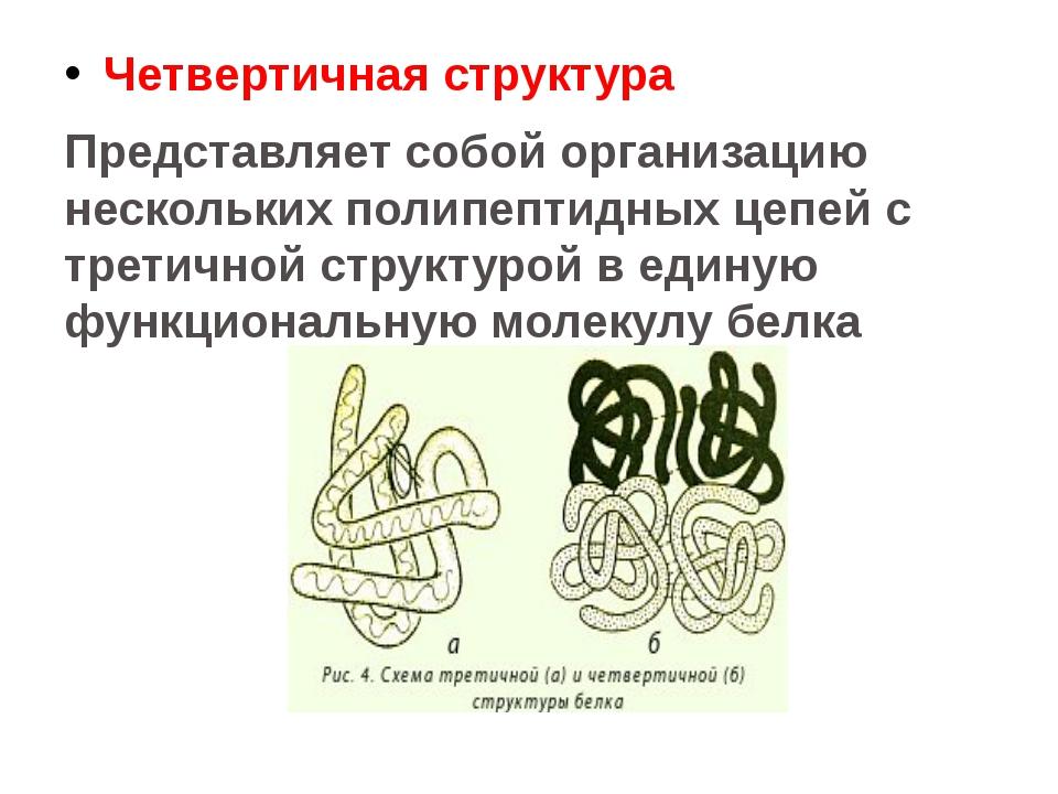 Четвертичная структура Представляет собой организацию нескольких полипептидны...