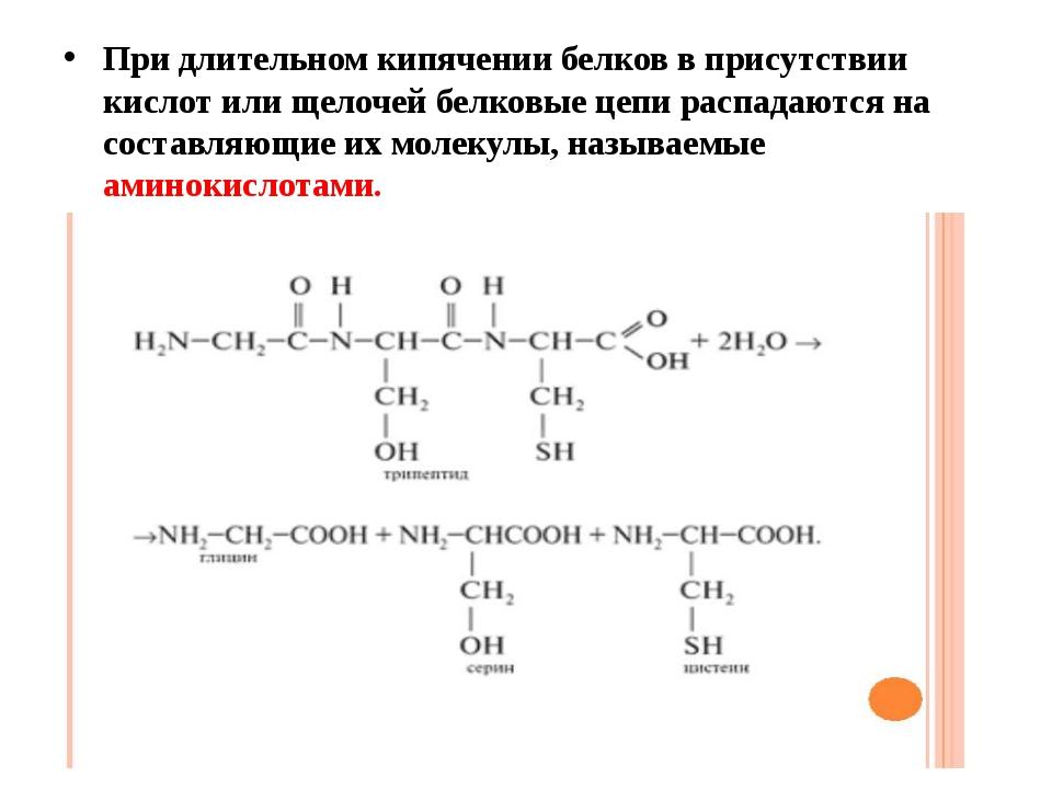 При длительном кипячении белков в присутствии кислот или щелочей белковые цеп...