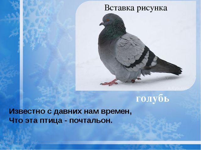 голубь Известно с давних нам времен, Что эта птица - почтальон.