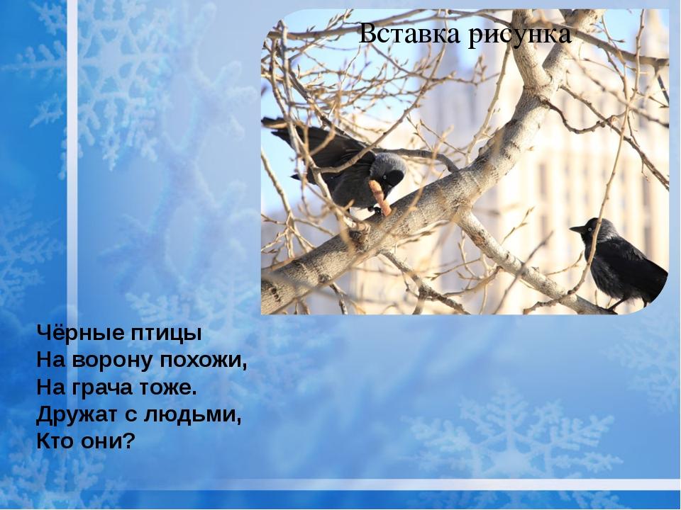 Чёрные птицы На ворону похожи, На грача тоже. Дружат с людьми, Кто они?