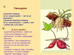 Тапсырма: Суретте тамыр түрөзгерістерінің қай түрі берілген? Суретте берілге
