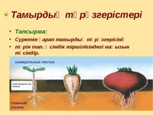 Тамырдың түрөзгерістері Тапсырма: Суретке қарап тамырдың түрөзгерісінің түрін