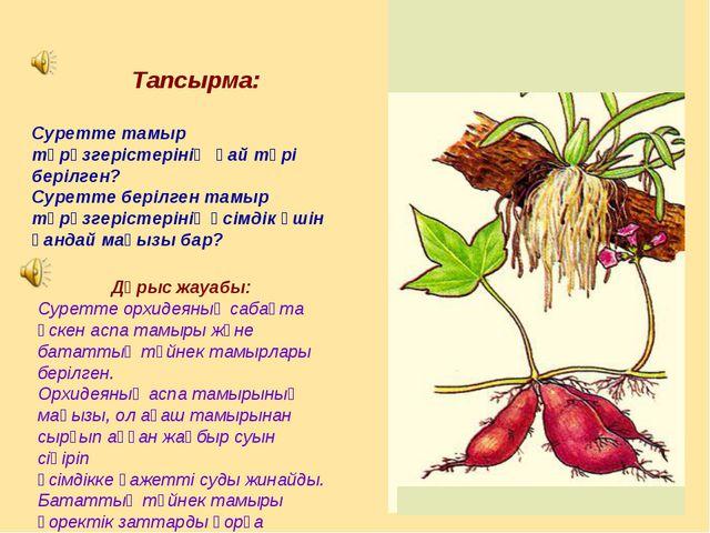 Тапсырма: Суретте тамыр түрөзгерістерінің қай түрі берілген? Суретте берілге...