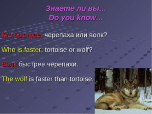 Знаете ли вы… Do you know… Кто быстрее: черепаха или волк? Who is faster: tor