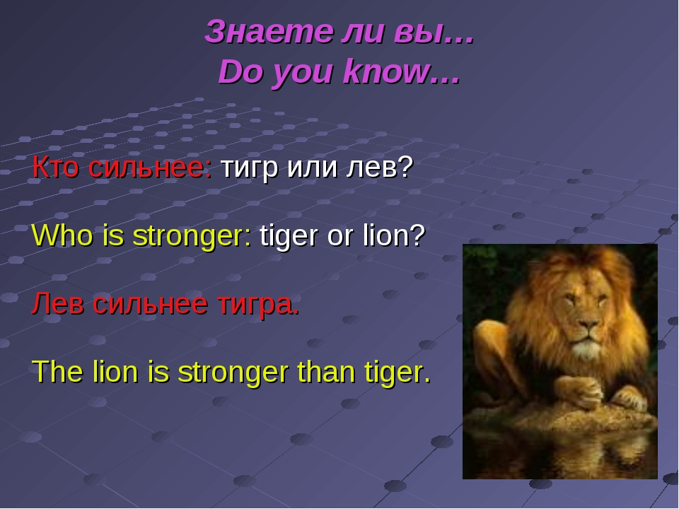 Знаете ли вы… Do you know… Кто сильнее: тигр или лев? Who is stronger: tiger...