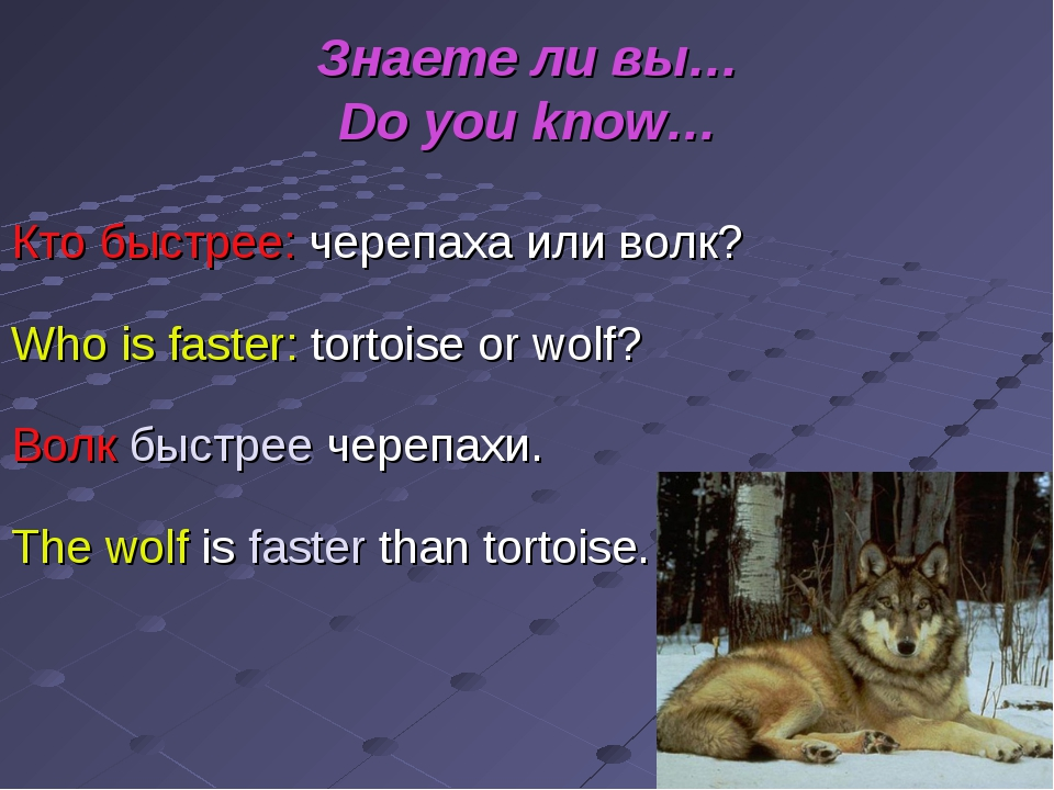 Знаете ли вы… Do you know… Кто быстрее: черепаха или волк? Who is faster: tor...